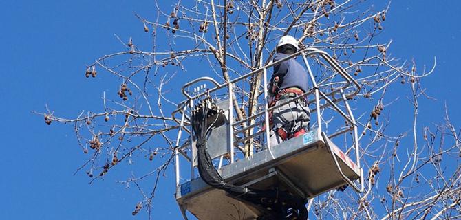 I Giardini di Simone - servizi invernali potature alberi