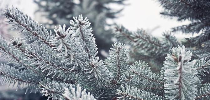 I Giardini di Simone - servizi invernali verde inverno