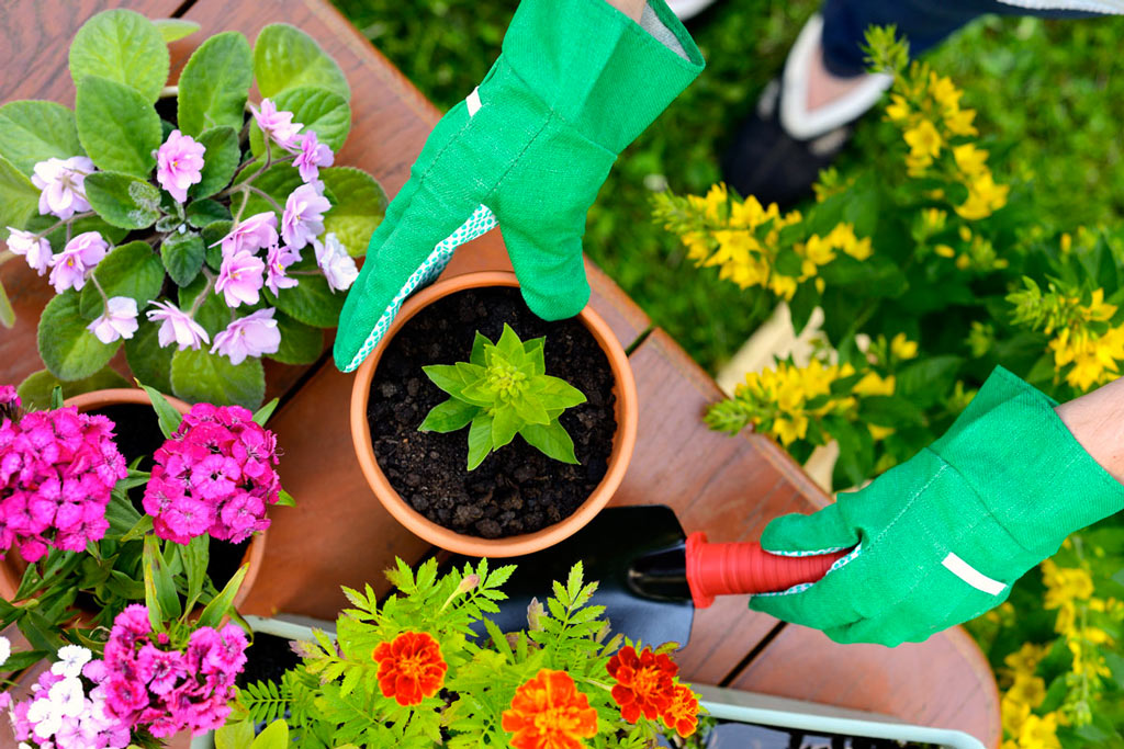 piantumazione fiori e piante