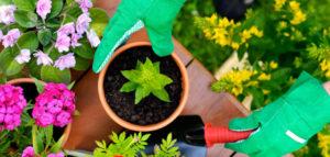 piantumazione fiori e piante _ i giardini di simone